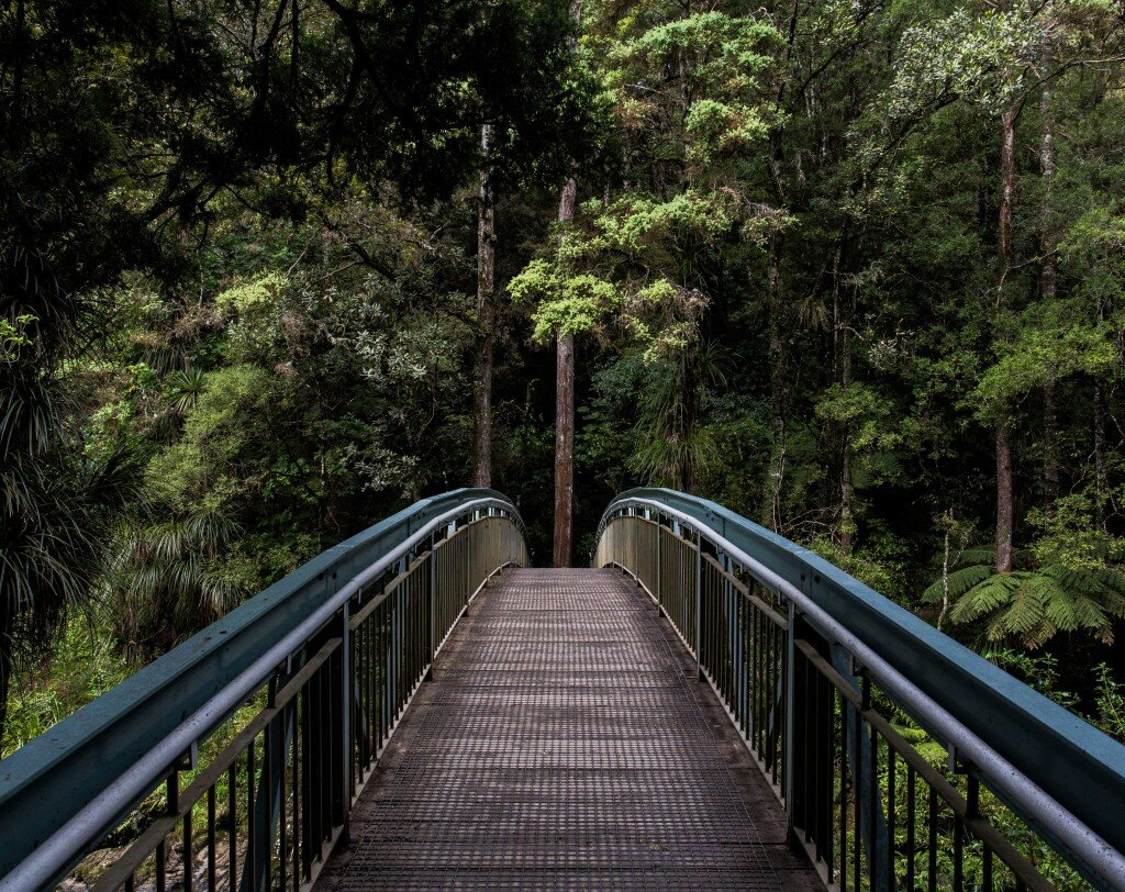 A bridge leading into the wilderness